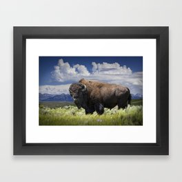 American Buffalo Bison by Yellowstone National Park in Montana Framed Art Print
