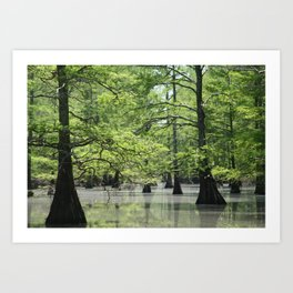 Cypress Trees in the Louisiana Swamp Art Print