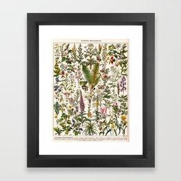 Adolphe Millot - Plantes Medicinales B - French vintage poster Framed Art Print