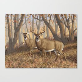Whitetail Deer Trophy Buck and Doe in Autumn Canvas Print