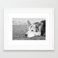 husky Framed Art Prints featuring husky by MrBdigital