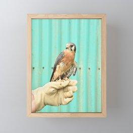 American Kestrel Falcon Bird Wildlife Northwest Framed Mini Art Print