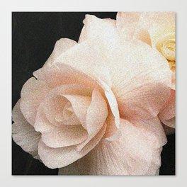 Pale Pink Begonia Canvas Print