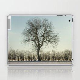 Winter tree in the low sun Laptop & iPad Skin