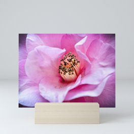 Camellia Blush Mini Art Print