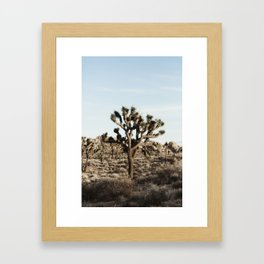 Joshua Tree National Park at Sunset Framed Art Print