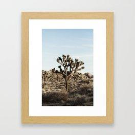 Joshua Tree National Park at Sunset Framed Art Print