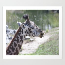 Giraffe profile Art Print