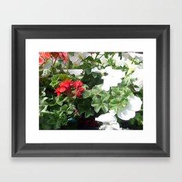 Pelargonien. Framed Art Print