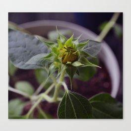 Pot Botany at the Laurels 4: Cringe Canvas Print