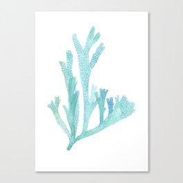 Turquoise blue seaweed Canvas Print