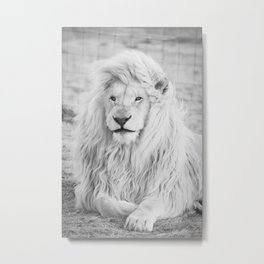 Albino Lion (Black and White) Metal Print