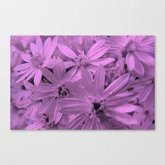 Pink Daisies Canvas Print