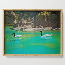 Amazing black necked swans swiming in green pond Serving Tray