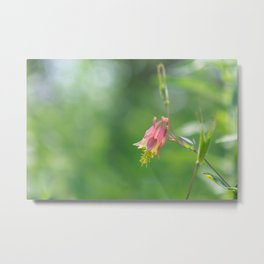 Columbine Bloom Metal Print