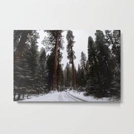 Entering the Giant Forest Metal Print