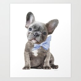 French bulldog, Frenchie, Blue Grey by Amanda Greenwood Art Print