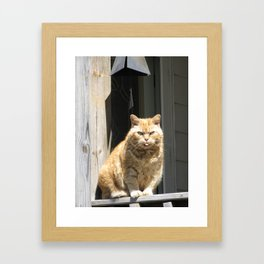 Cat Boy Framed Art Print