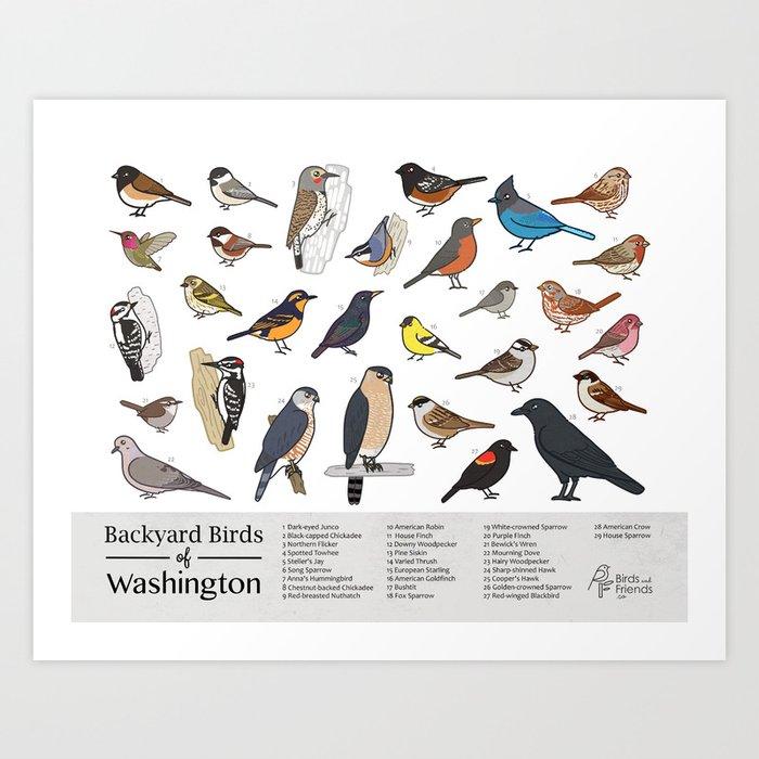 photograph relating to Printable Birds identify Washington Country - Printable Back garden Birds of Washington Industry Marketing consultant Print - Printable Chicken Artwork - I Artwork Print via birdsandfriends
