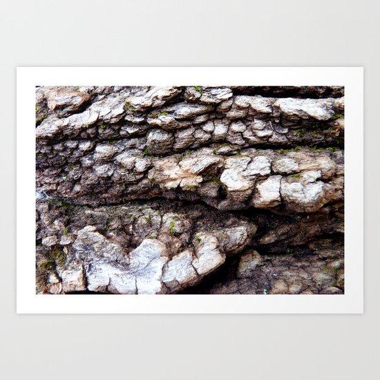 Wood Texture #1 Art Print