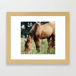 afternoon munchies Framed Art Print