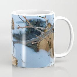Blue Jay on a White Cedar Log Coffee Mug