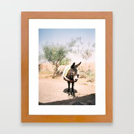 Cute donkey in the Agafay Desert of Morocco   Marrakech travel photography Framed Art Print