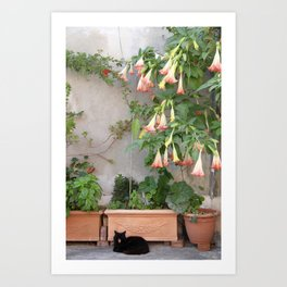 Street Cat of Positano Art Print