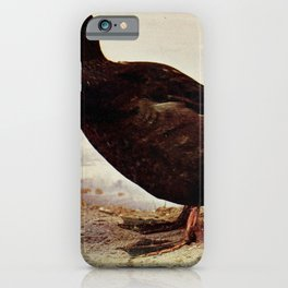 Vintage Print - Birds and Nature (1897) - White-Winged Scoter iPhone Case