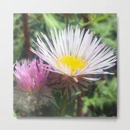 Watercolor Flower, Fleabane 06, RMNP, Colorado Metal Print