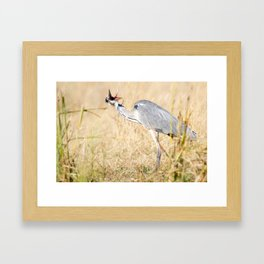 When you don like photographers, bird version Framed Art Print