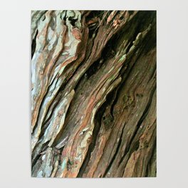 Old Olive tree weathered wood Poster