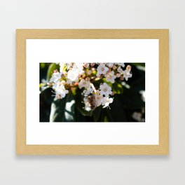 Bee in Late Winter (1 of 2) Framed Art Print