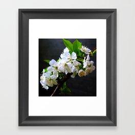 My Cherry Framed Art Print