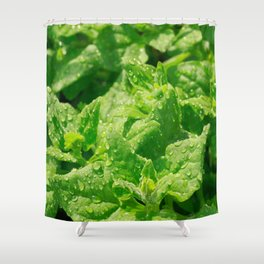 Spinach leaves Shower Curtain