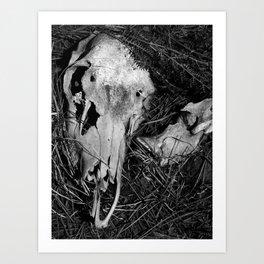Bear Wallow Art Print