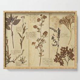 Dried plants - Vintage Herbarium Serving Tray