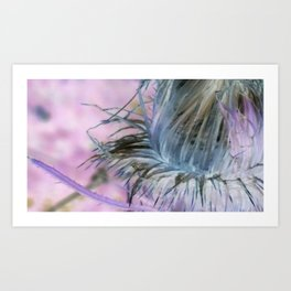 Spent Scotch Thistle Flower Art Print