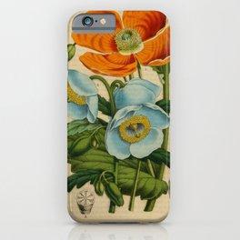 Flower papaver pilosum meconopsis wallichii13 iPhone Case