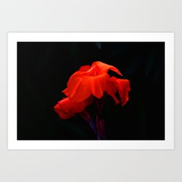 Orange Indian Reed Lily Flower Art Print