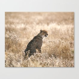 Art Print / Cheetah Portrait Canvas Print