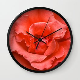 Touch of Class hybrid orange rose is blooming Wall Clock