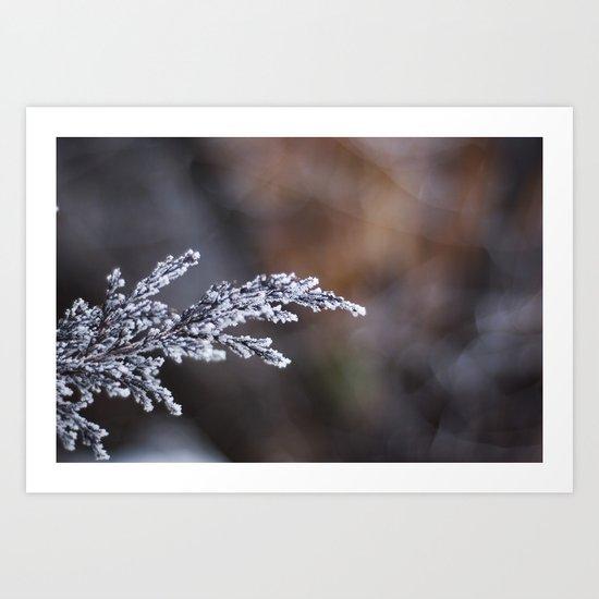 Frosted Juniper Art Print