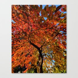 Flames of Fall by Seasons Kaz Sparks Canvas Print