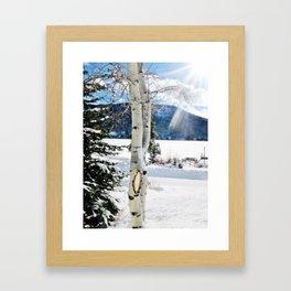 White Birch Tree in Snow Framed Art Print