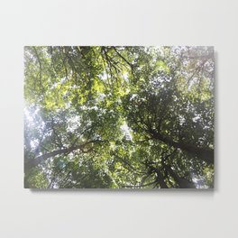 Looking up at the Trees Metal Print