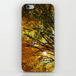 Under the Autumn trees iPhone Skin