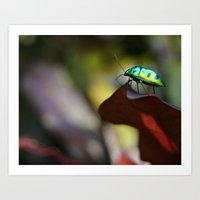 philippines Art Prints featuring Iridescent Bug (Philippines) by Dr. Tom Osborne