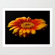 Floral Flames Art Print