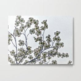 White Dogwood against a Gray Sky Metal Print